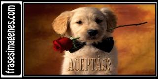 Encontraras las imagenes mas tiernas y bonitas de internet, imagenes de amor, imagenes de amistad, animales tiernos y mucho mas